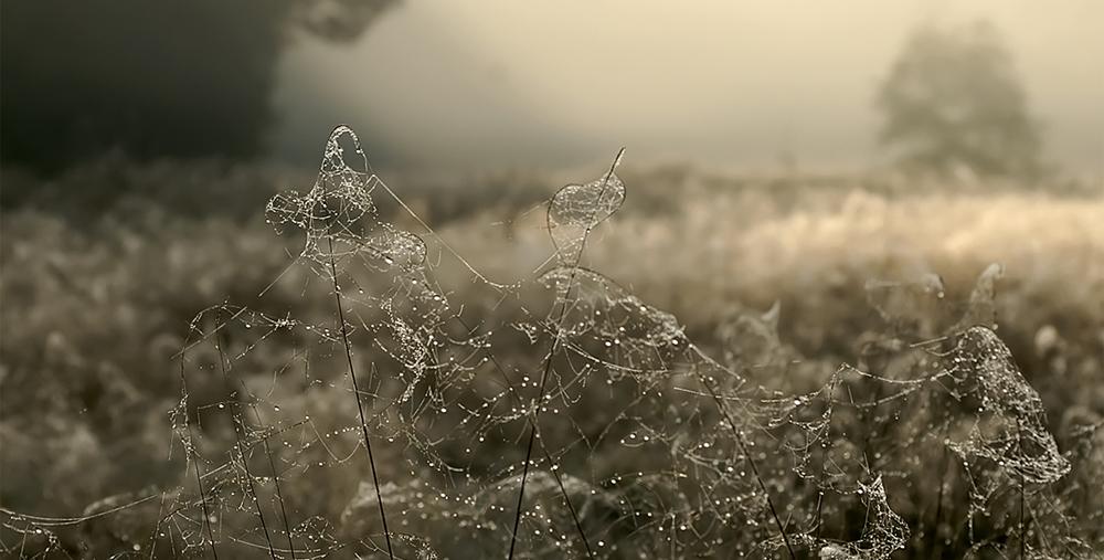 Diamonds in the Mist